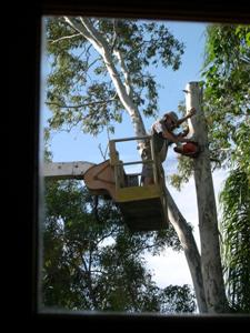 Using a Cherry Picker to Cut Down a Tree
